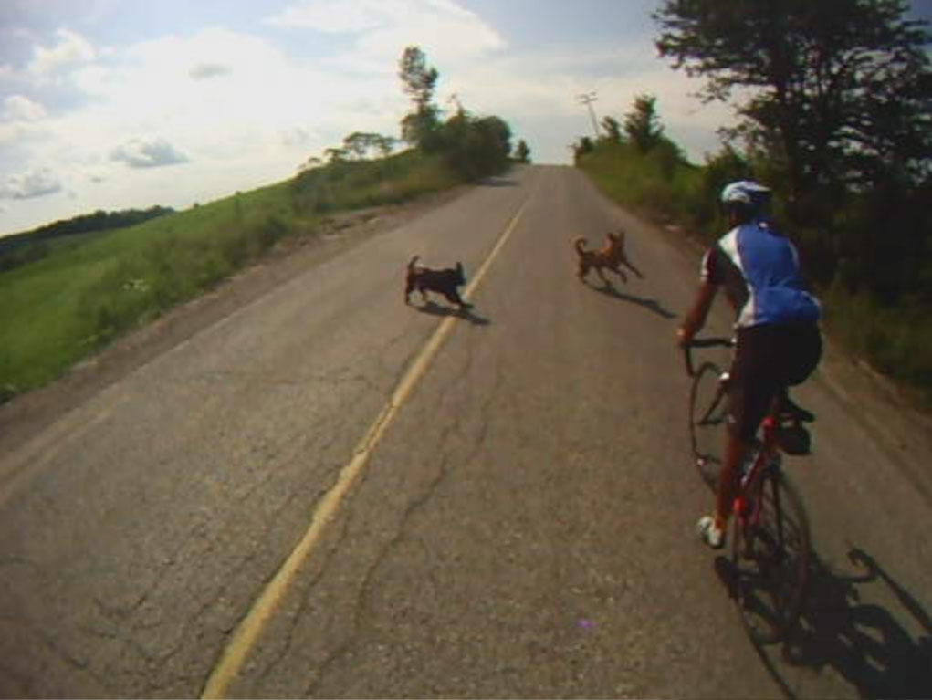 how to stop dog going after bicycles